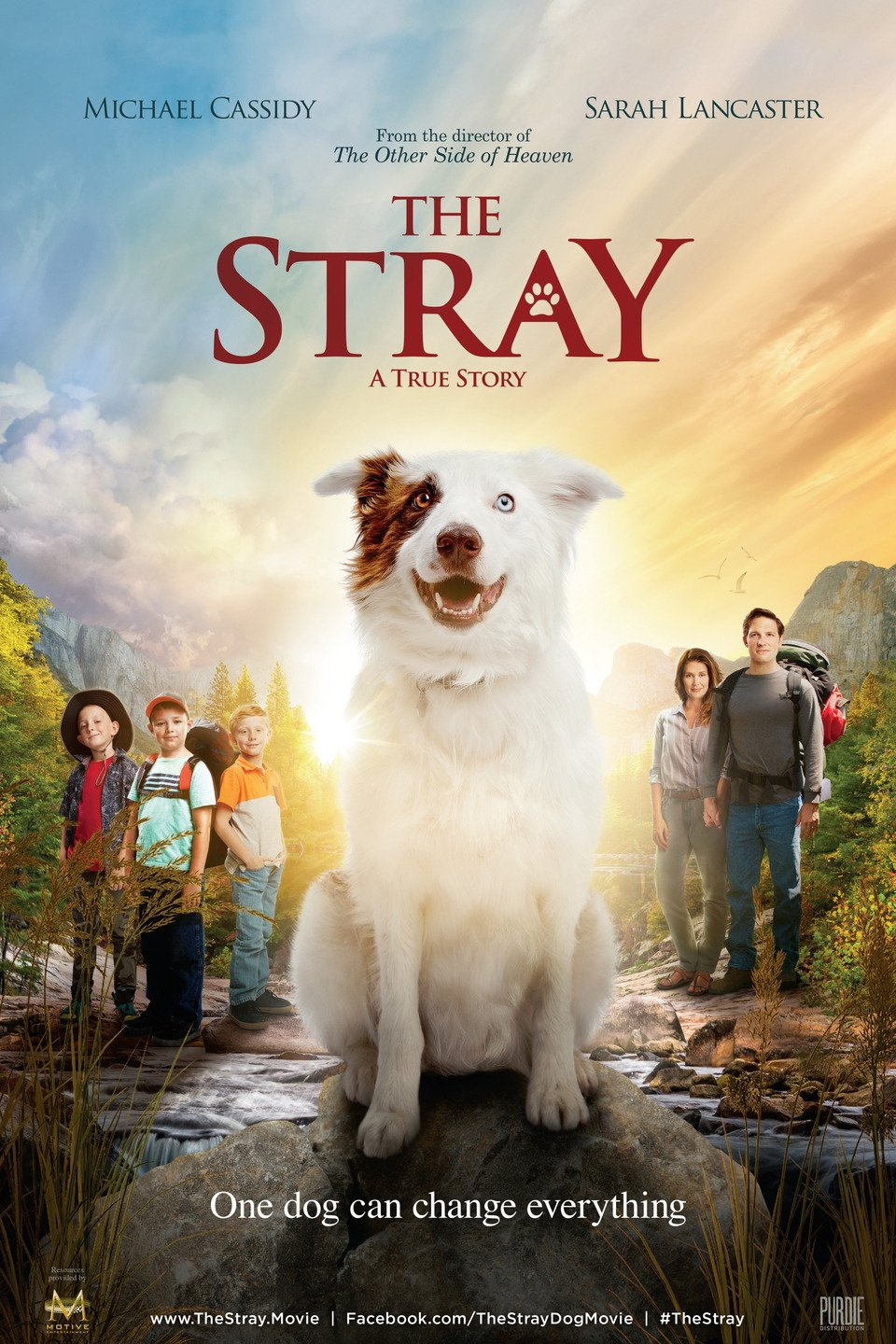 Assistir The Stray